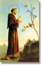 St. Francis Wallet Size Holy Card